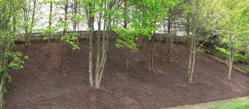 wooded bank after landscaping