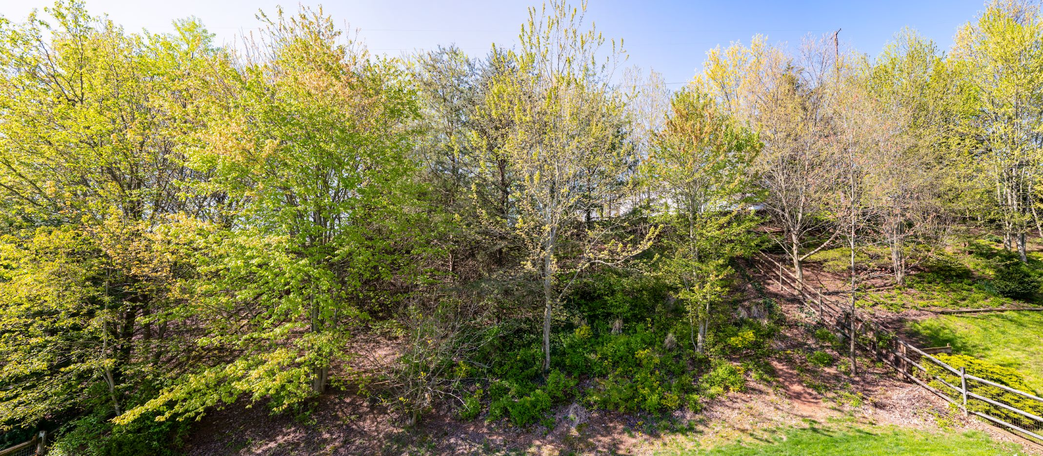 Overgrown wooded bank before landscaping