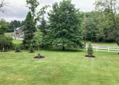 yard with young newly planted trees